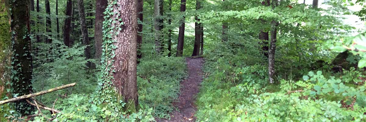 path in woodland